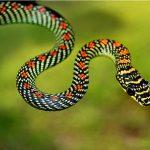 Mơ thấy rắn đánh con gì chắc trúng?