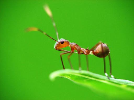 Mơ thấy kiến