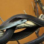 Nằm mơ thấy rắn đen đánh con gì chắc ăn, là điềm hên hay xui?